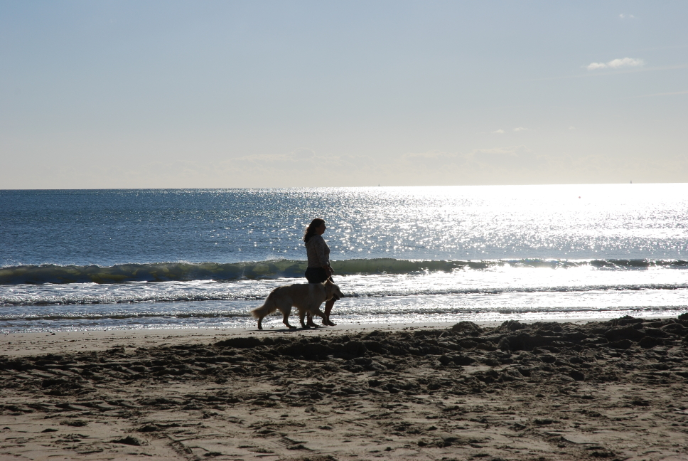 Bournemouth_Beach_dog.JPG