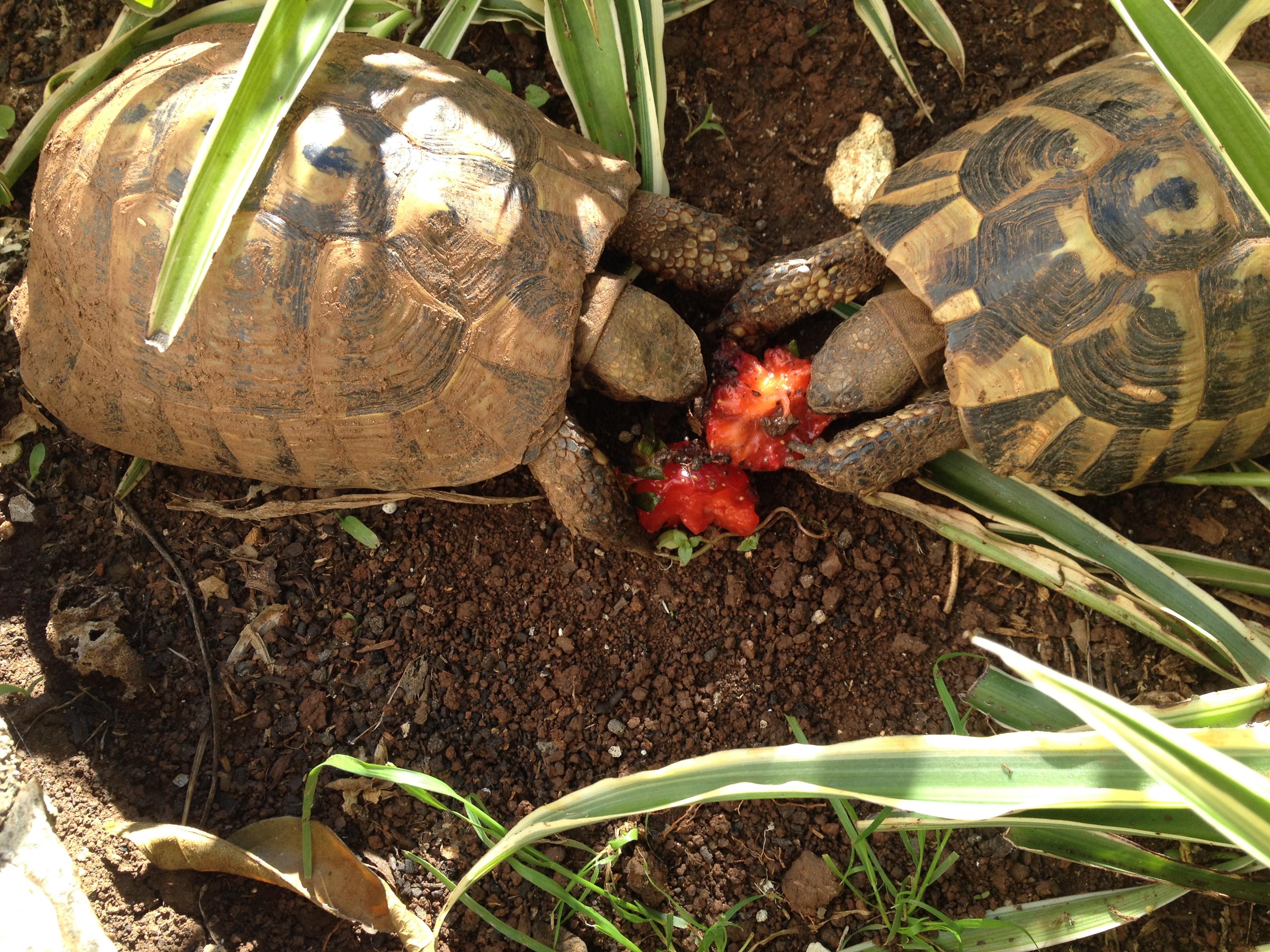 Ike & Tina Turtle