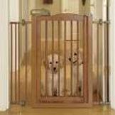 cancelletto tibetan terrier