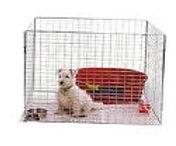 recinto tibetan terrier