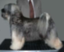lost valley tibetan terrier