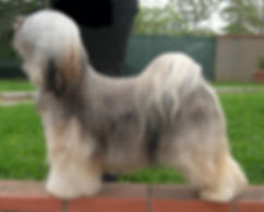 tibetan terrier lost valley oro