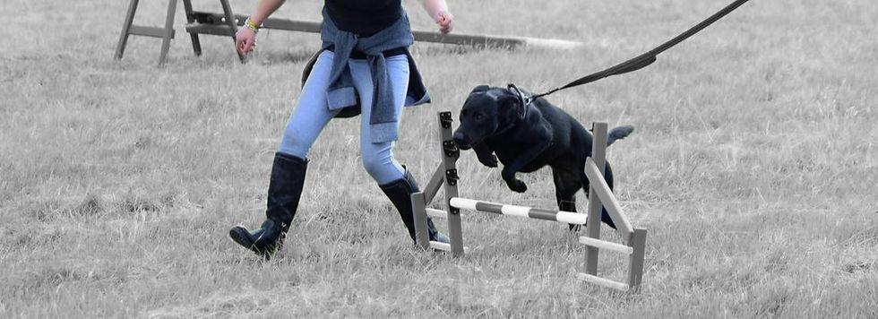 Dog agility Armatus Canine