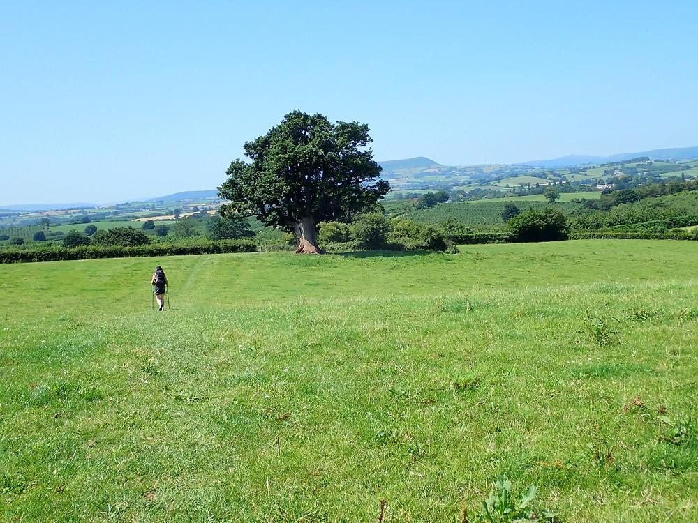 A woman walking across a field in sunshine