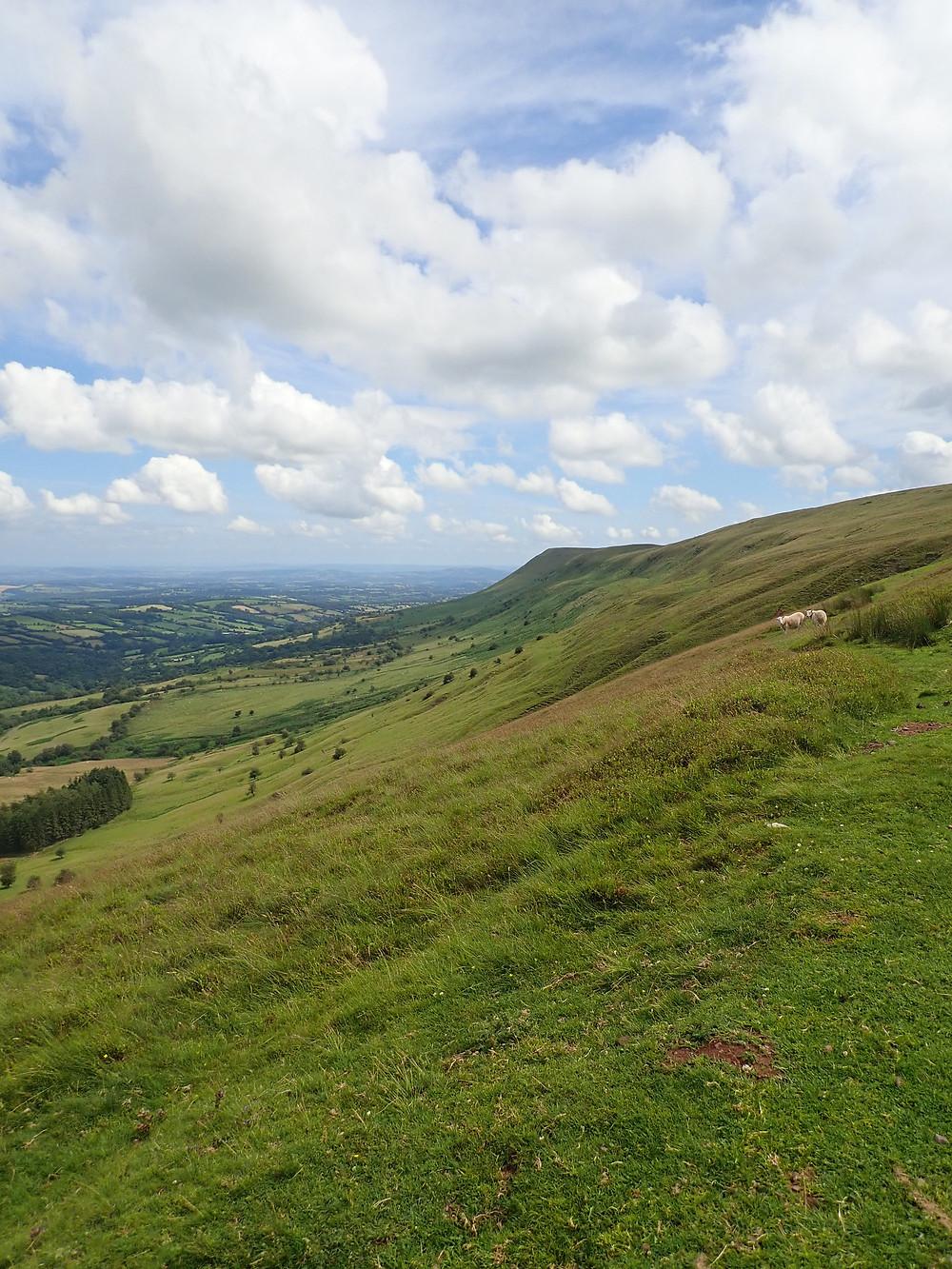 A hillside in the sunshine