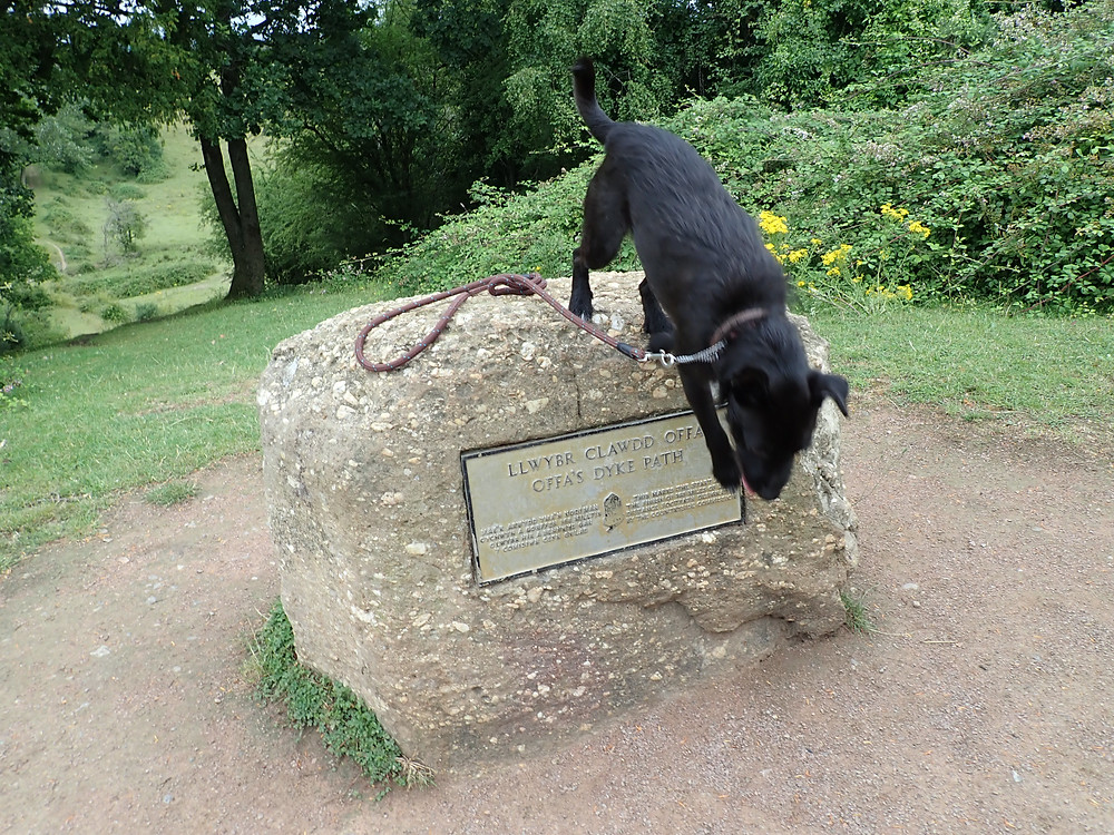 A small black dog jumping off a stone with Offa's Dyke path written on tt
