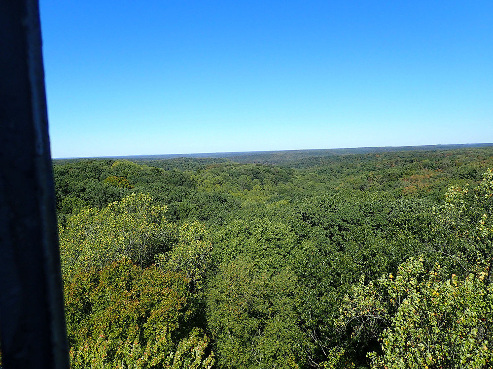 a view over the top of the forest.