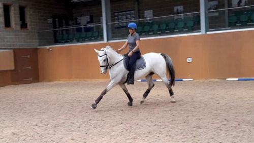 ah-saddles-facebook-cara-thorne-review-0