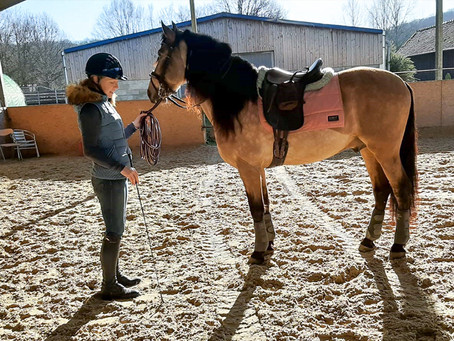Holistic Management - Part 1- Straightness & Asymmetry of The Horse