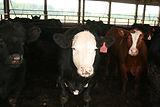 dull homestead farm