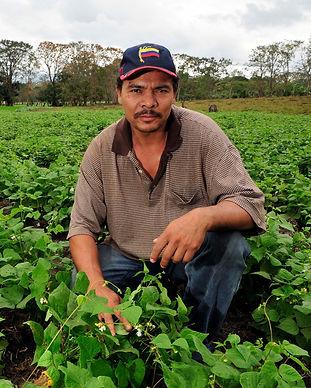Farmer_in_bean_field,_Nicaragua_edited.j