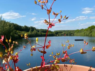 lake at Lincoln
