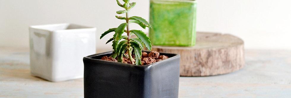 Square Planters, Small Ceramic Plant Pot, Ceramic Planter, Succulent Ceramic Holder