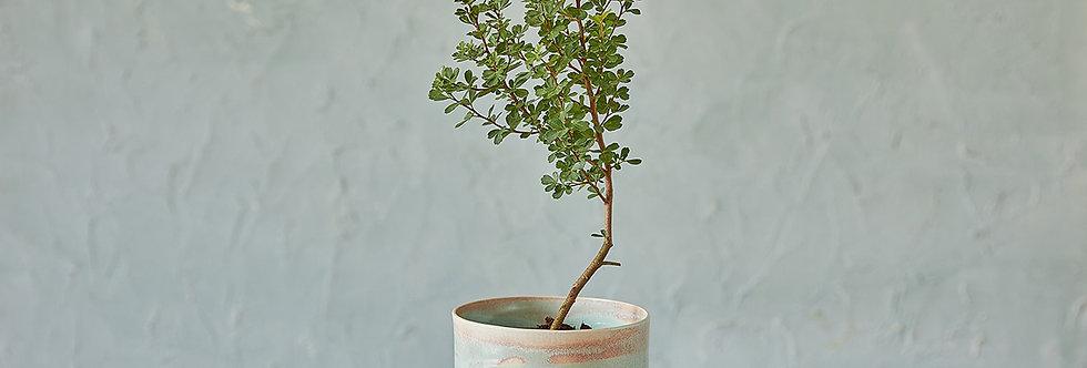 Turquoise Ceramic Planter, Indoor Planter, Modern Plant Holder, Pottery Pot, Home Planter, Succulent Planter