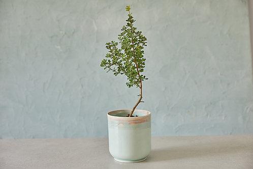 עציץ קרמיקה תכלת, עציץ קרמיקה לסוקולנטים, עציץ קרמיקה בעבודת יד לצמחי תבלין