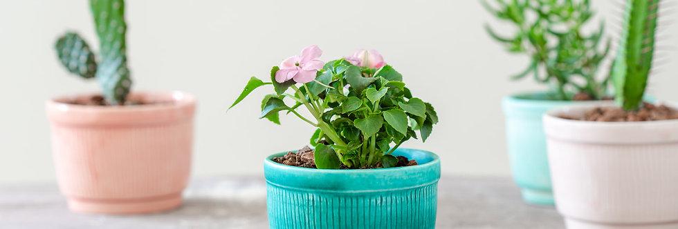 Striped Ceramic Cactus Planter, Indoor Mini Planter, Modern Plant Holder, Pottery Pot