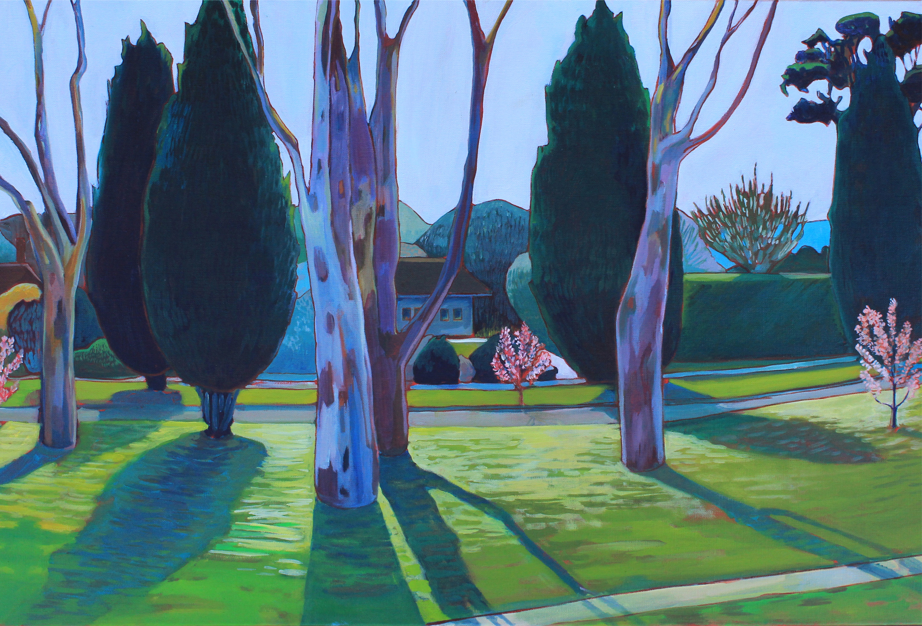 Afternoon Gum and Cherry Blossom, Ainslie