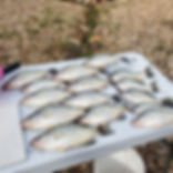 table of crappie.jpg