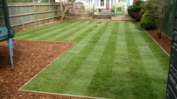Lawn using hard wearing turf