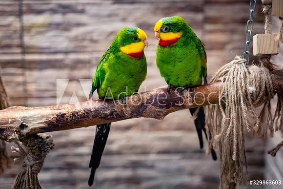 Groene papegaaien