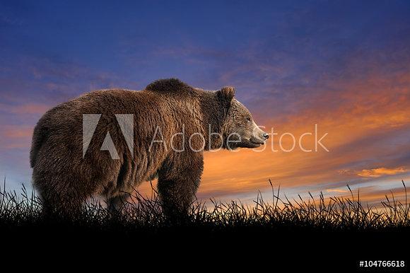 Bruine beer bij zonsondergang