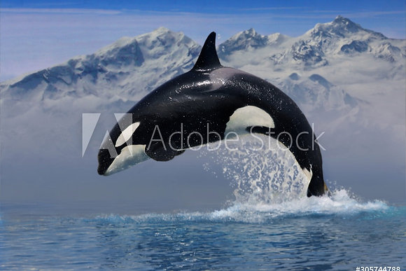 Springende orca