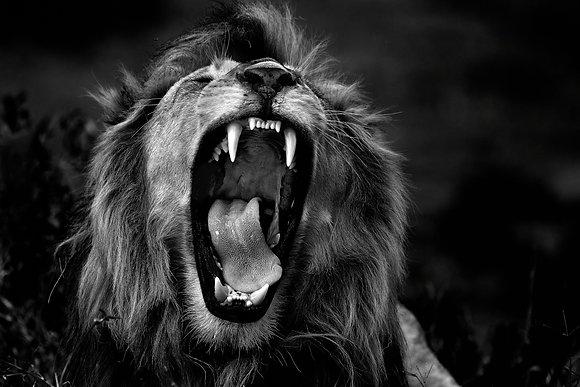 Dominante Leeuw