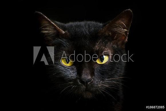 Zwarte kater