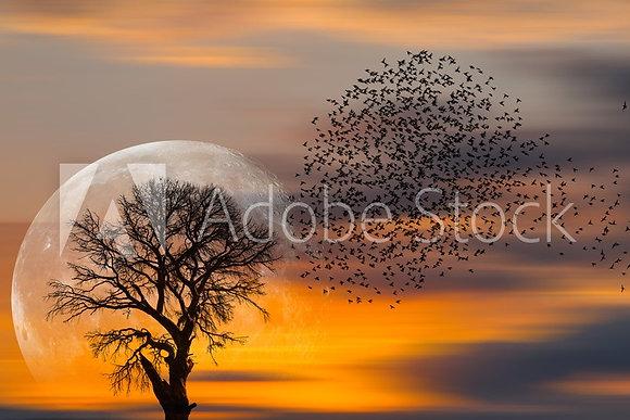 Eenzame boom met zwerm vogels