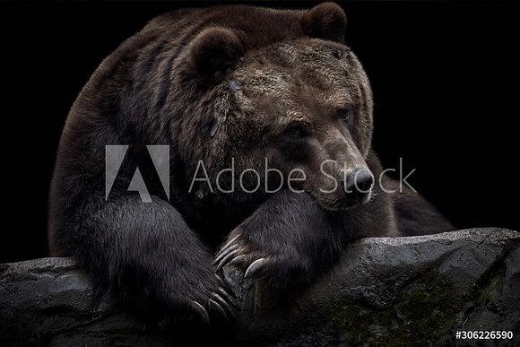 Kamchatka beer