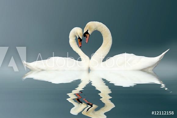 Verliefde zwanen