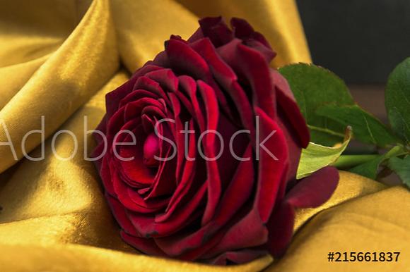 Roos op gouden deken