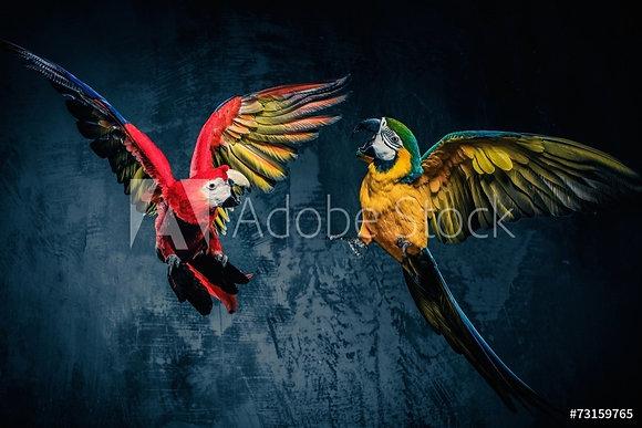 Kleurrijke spelende papegaaien