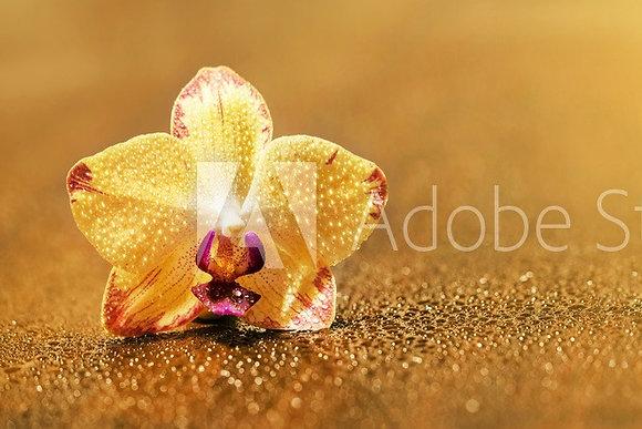Gouden Orchidee