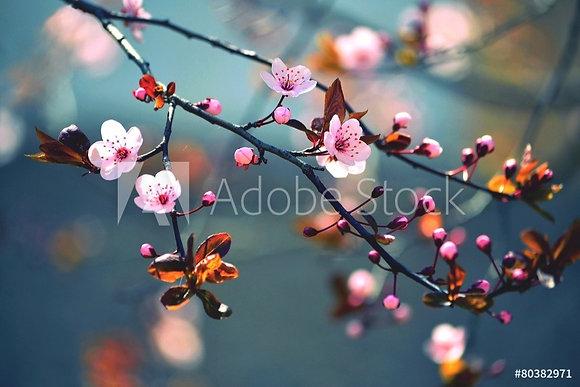 Japanse twijg Sakura