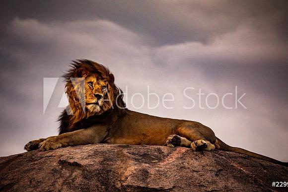 Rustende leeuw op berg