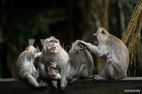 Apen familie