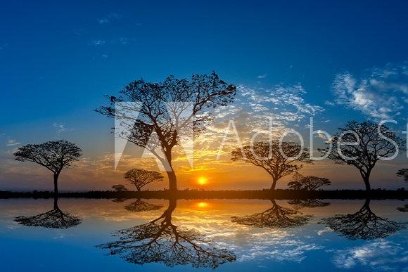 Acacia bomen bij zonsondergang