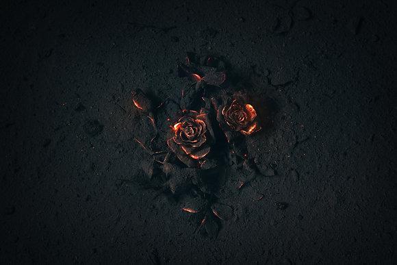 Verbrande Roos