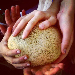 What is this_! It's children falling in love with a mushroom of course! This beautiful mushroom (Bea