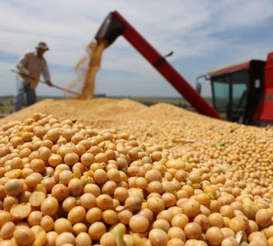 Rússia pode suspender importação de soja brasileira por excesso de agrotóxicos
