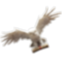 owl-cutout_grande.png