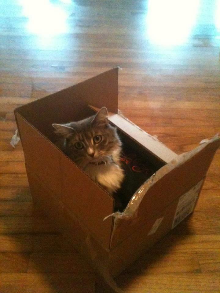 Cat Air Cargo