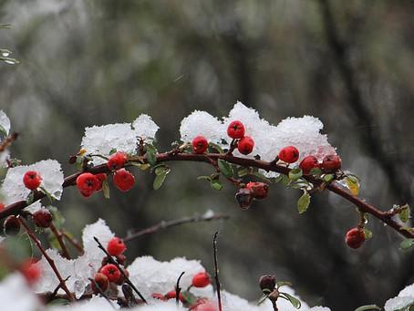 First Snow (a short short story)