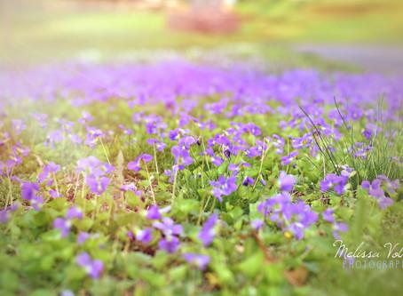 Haiku 2 - of a bloom