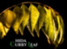 カレーリーフは、インド原産・ミカン科の植物、カレーツリーの葉です。  香ばしい独特な香りが食欲をそそり、さまざまな薬効を持つハーブとして、 インドでは毎日の食生活に使われています。植物自身の持つ抗菌作用、 強壮、健胃、消化促進、血糖値降下、赤痢治療、オイルによる若白髪の治療、 アロマテラピーでは気分を落ち着ける処方などにも用いられているそうです。  通常日本では乾燥葉が多く流通していますが、残念な事に、 独特の香りは乾燥や時間の経過で失われやすいのです。  この商品は、当農園にて、 農薬等科学的物質を使用せずに育てている生の葉です。カレーリーフは、インド原産・ミカン科の植物、カレーツリーの葉です。 香ばしい独特な香りが食欲をそそり、さまざまな薬効を持つハーブとして、インドでは毎日の食生活に使われています。 植物自身の持つ抗菌作用、強壮、健胃、消化促進、血糖値降下、赤痢治療、オイルによる若白髪の治療、アロマテラピーでは気分を落ち着ける処方などにも用いられている