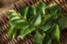 飛騨産のカレーリーフの生葉日本の家庭の味、肉じゃがにも合います。 (お肉の臭みを消し、香ばしい香りを付けます。) ご家庭の肉じゃがレシピに少々加えて、お試しください。 そのほか、手作りコスメや、お風呂に入れるバスハーブとして。  【保存方法】 香りが飛ばないようにビニール袋等に小分けにし、冷蔵、または冷凍も可能です。 オイル漬けにしておいて、お料理の香り付けにもお使いいただけます。カレーリーフは乾燥葉が多く流通していますが香りは乾燥や時間の経過で失われます。だから生のカレーリーフの葉は貴重で流通しません。カレーには欠かせないハーブ。本場のカレー好きには有名なスパイスです。