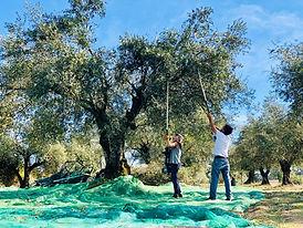 harvest galega.jpg
