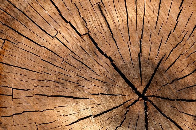 Bois massif (1).jpg