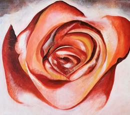 fin rose.jpg